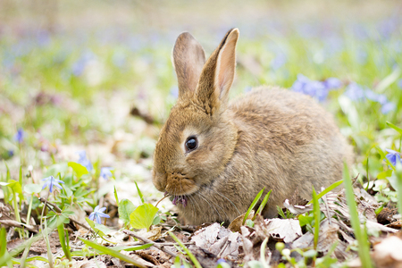 wild hare on a flowering meadow in spring. Easter Bunny in the flowering forest. Spring concept for the holidays. 스톡 콘텐츠
