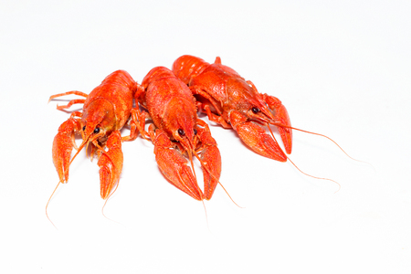 three boiled crayfish on a white background Imagens
