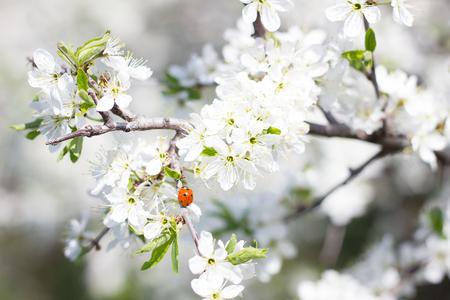 fragile sprigs of flowering tree. Spring seasons. Spring concept