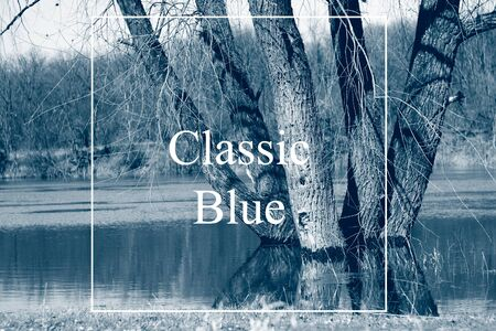 trees in the river in spring in high water, countryside. Classic blue is the main color trend of 2020. Tinted in blue color, blank for design, natural background with white frame and inscription Classic blue