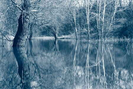 trees in the river in spring in high water, countryside. Classic blue is the main color trend of 2020. Tinted in blue, blank design, natural background with a place for the inscription