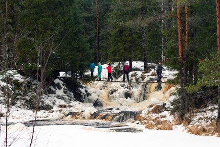 Saint Petersburg. RUSSIA . January 2, 2020. a group of tourists walk on a pedestrian bridge in nature in the winter . Hiking in coniferous forests. Group nature walk