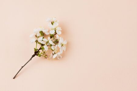 flowering branches on a pastel background with a place for an inscription. Creative spring concept with copy space. Spring flowers on a pastel beige background, closeup Stok Fotoğraf