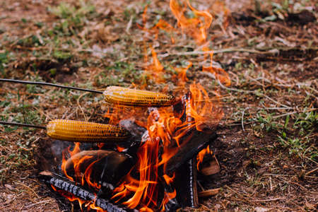 two metal skewers with skewered corn are held over the fire, Frying vegetables outdoors in the wild. Camping concept