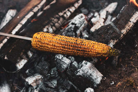 yellow corn is grilled on open coals in the open air, close-up. Cooking food in the wild, on a hike Foto de archivo