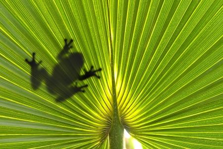 Kikker op blad