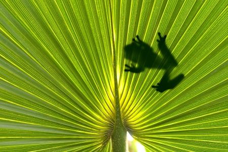 Frog on leaf photo