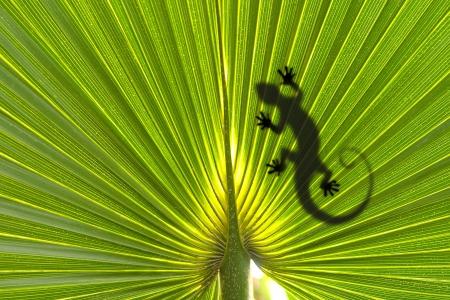 lagartija: Lagarto en la hoja