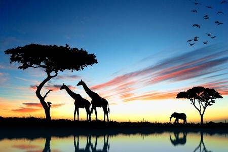 Safari in Afrika silhouet van wilde dieren reflectie in het water Stockfoto