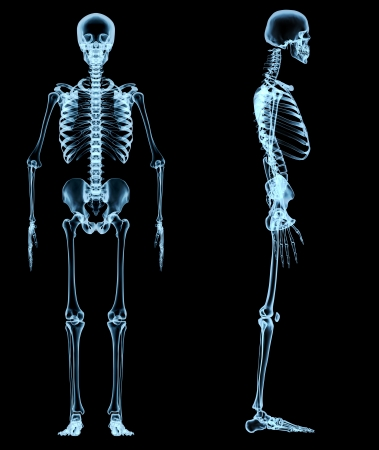 human skeleton under the x-rays  photo