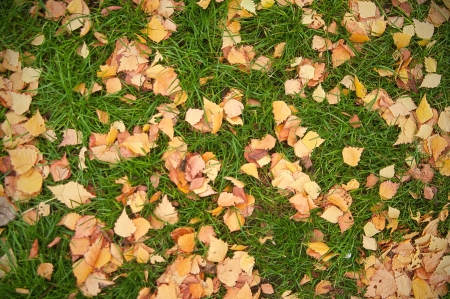 fallen autumn leaves on the grass texture photo