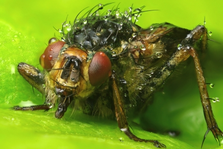Extreme macro photo a fly  Stock Photo - 17180205