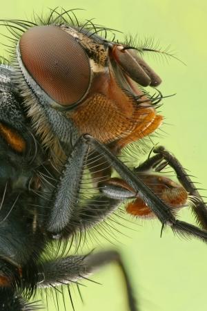 Extreme macro photo a fly  Stock Photo