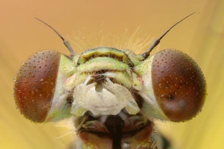 Dragonfly head extreme macro on yellow Stock Photo - 17180160