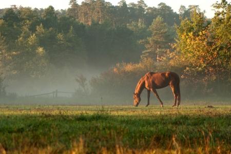 朝の霧の草原に馬。夕日や日の出。