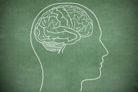 Hersenen in het hoofd op groene krijtbord
