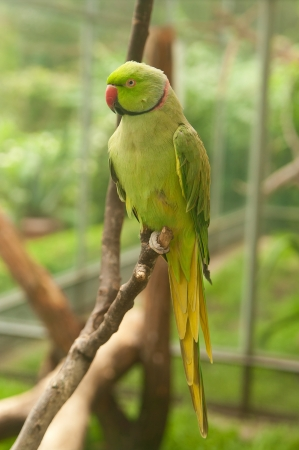 green parrot on the branch Stock Photo - 19569319