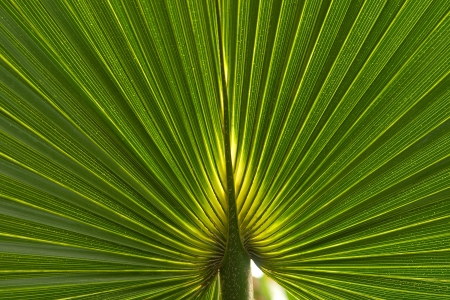 diverging: Abstract image of Green Palm, green background