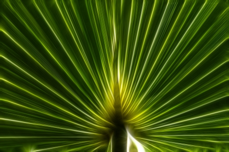 Abstract image of Green Palm, green background