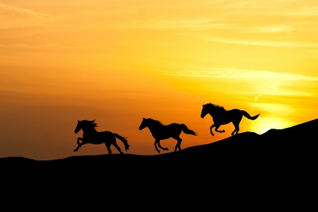 Galloping Horse Silhouette Galloping Wild Horses