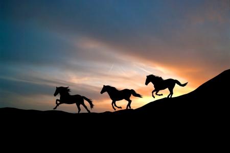 野生の馬を疾走します。馬のシルエットを背景に空