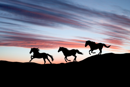 Galloping wild horses. Horse silhouette against the sky