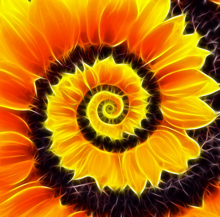 golden daisy: Sunflower infinity spiral abstract background Stock Photo