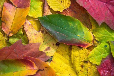 Autumn leafs colours Фото со стока