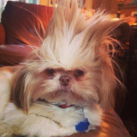 crazy hair: Dog with crazy hair