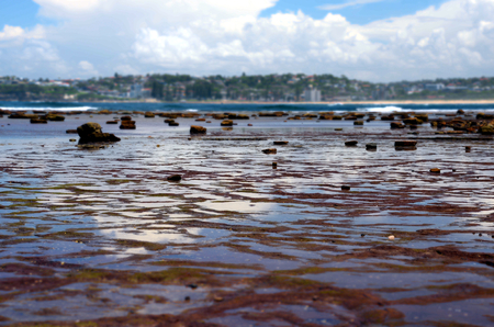 headland: Low tide at Long Reef Headland (Sydney, Australia) Stock Photo