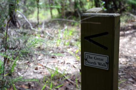 bushwalk: The Great North Walk. Bushwalking in Lane Cove National Park. Sydney, NSW, Australia