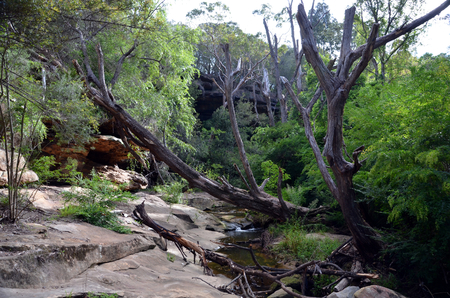 nsw: Bushwalking in Lane Cove National Park. Sydney, NSW, Australia Stock Photo
