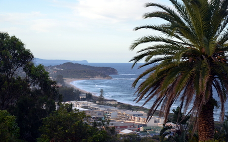 nsw: Narrabeen beach from Collaroy Plateau (Sydney, NSW, Australia). Palm Tree in the foreground.