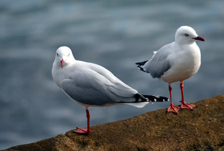 motionless: Close up of two seagulls on the rock fence.