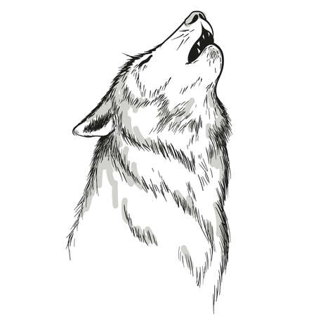 howling silhouette white wolf on white background
