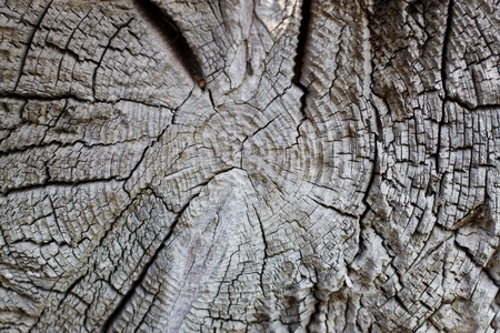 Close-up of an aged cut down tree trunk