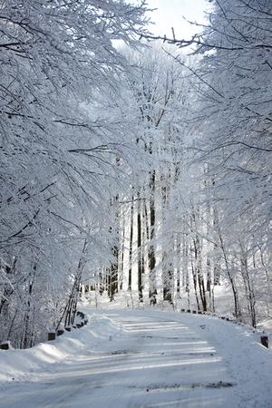 Winter landscape, a snowy alley photo