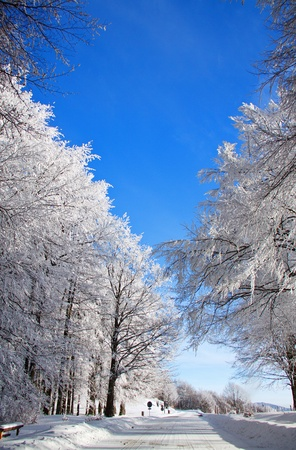 Snowy trees, a snowy road, blue sky in background Stock Photo