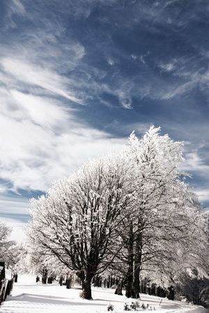 Snowy trees with blue sky and white clouds in background photo