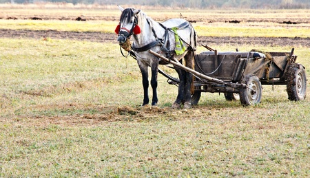 Portrait of a horse standing in the field with a carriage photo