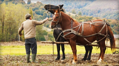 Farmer ploughing in field with two horses 스톡 콘텐츠