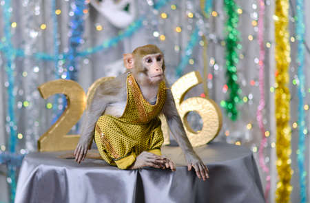 greeting new year card with well-dressed monkey on silver table, numbers Фото со стока - 48512084