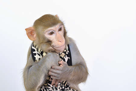 alive: Close-up of a young dressed alive monkey on white background