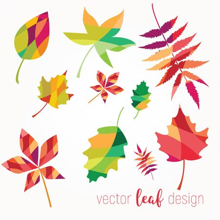 collection beautiful colourful autumn leaves . vector illustration