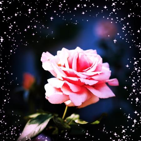 照らす: 庭に美しいピンクのバラ。魔法の輝き