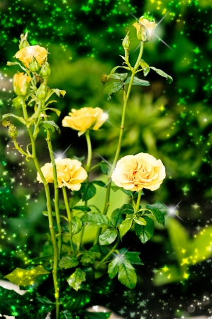 valentinas: Beautiful yellow roses on green background with shine Stock Photo