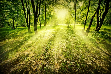 Fantasy green deep forest on summer morning photo
