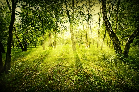 Fantasy green deep forest on summer morning