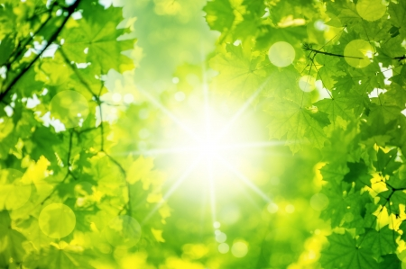 nature spring bokeh background with sun beam with tree leaves in defocus photo