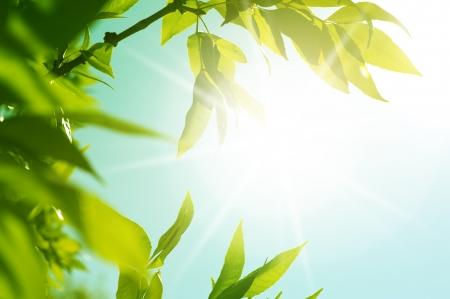 fresh new green leaves glowing in sunlight  Defocus